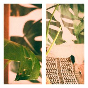 Décoration végétale avec Posterlounge + concours
