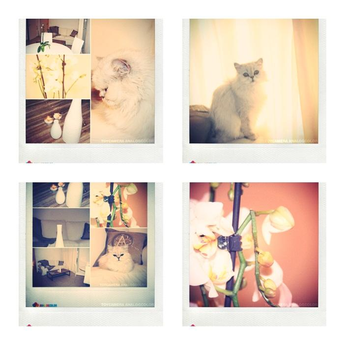 souvenirs-2011-L-fdEeKD